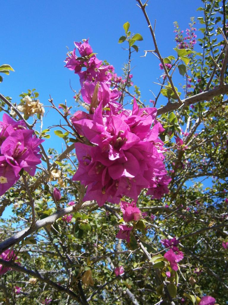 Blumen im Garten des Rathauses
