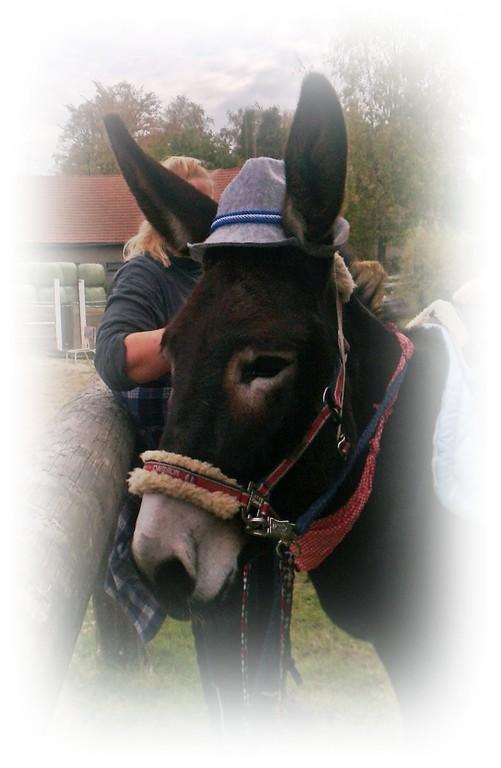 ein bayrischer Esel