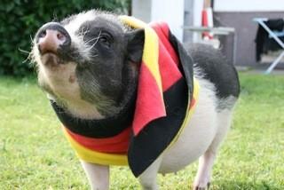Schweini für Deutschland