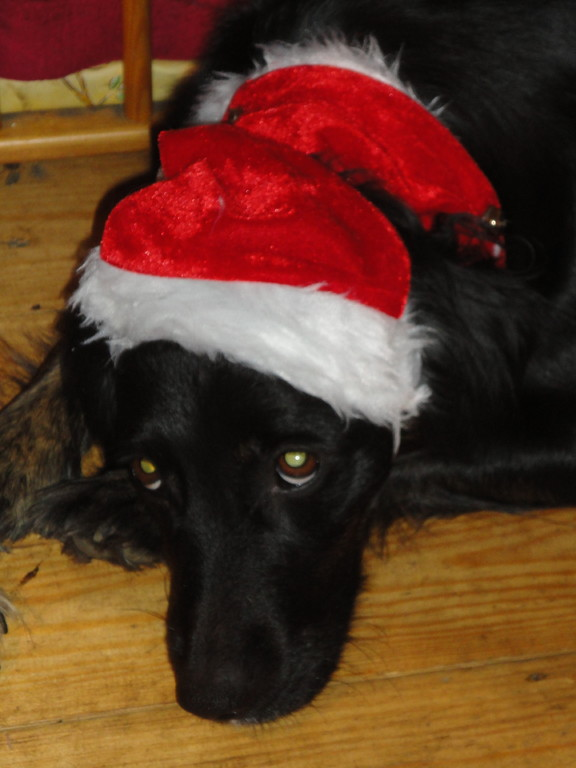 Leila der Weihnachtself