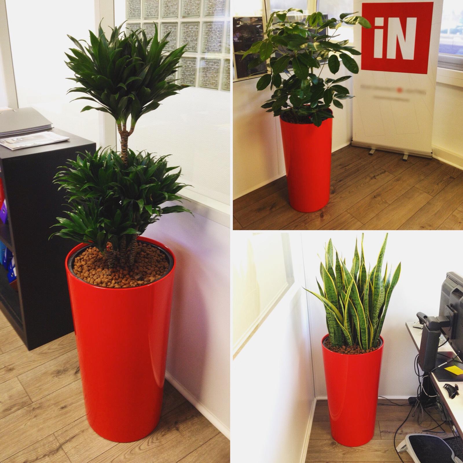 Paysagiste d'intérieur: location de plantes vertes pour ces bureaux de région parisienne