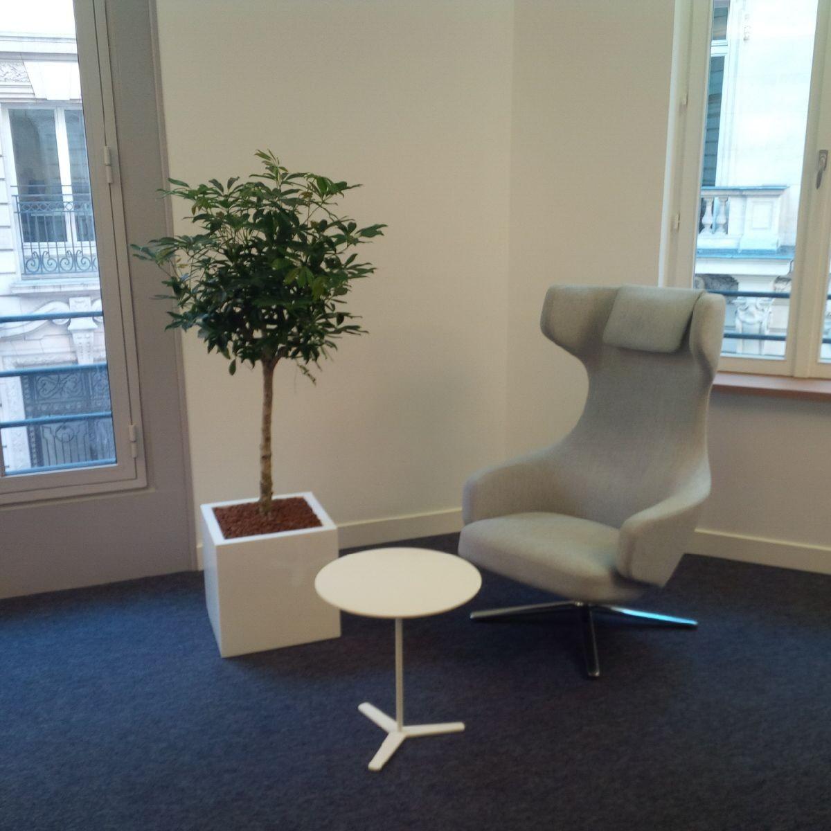 Paysagiste d'intérieur: location de végétaux pour les bureaux d'une entreprise Parisienne