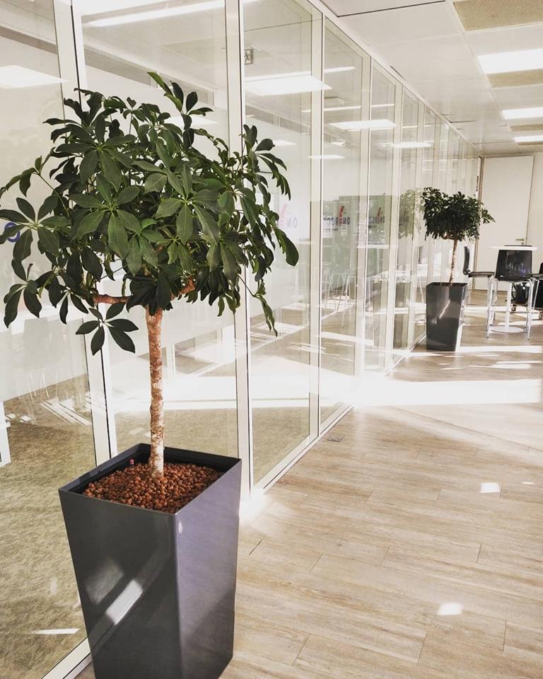 Location de plantes d'intérieur pour bureaux à Paris