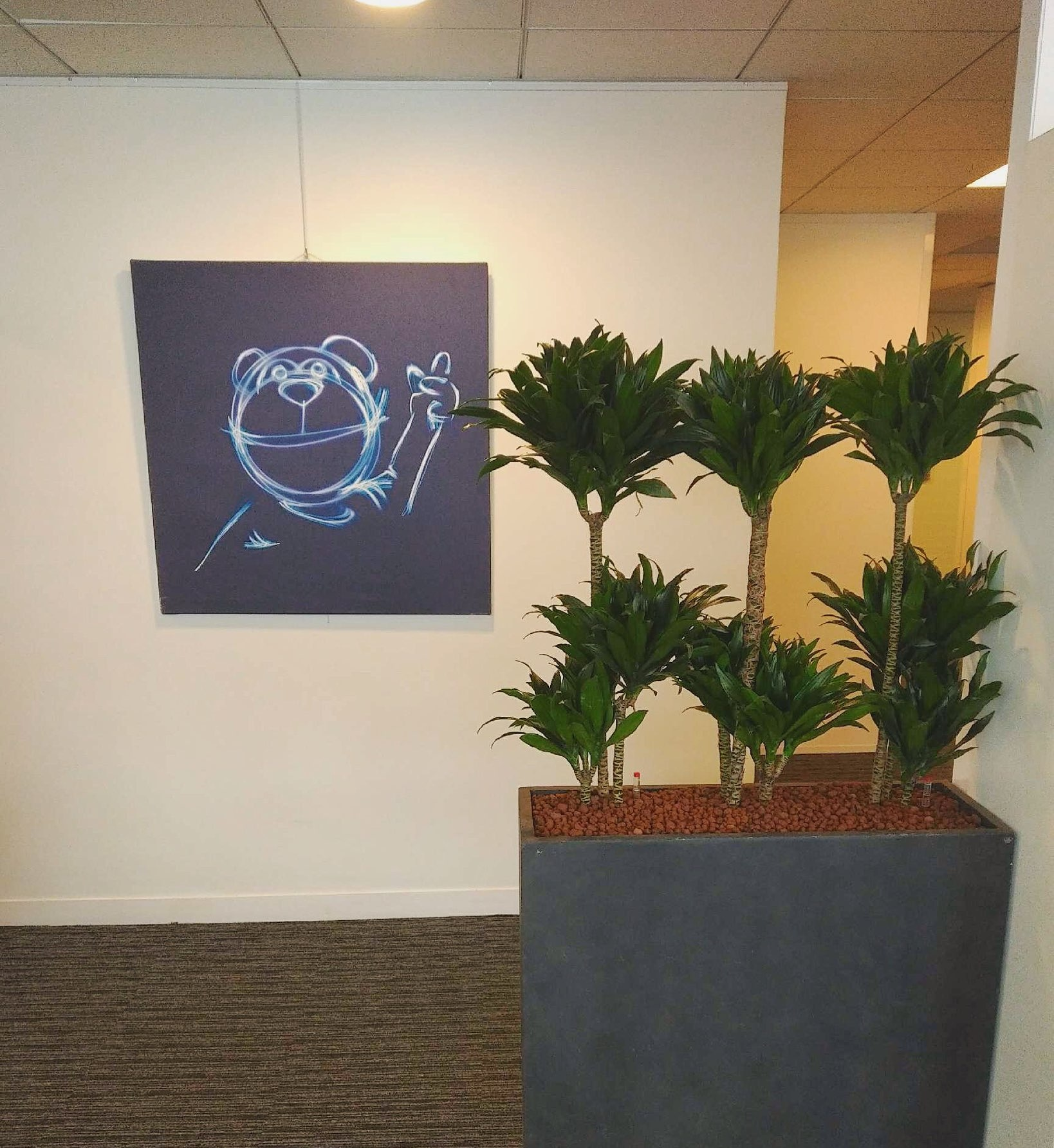Paysagiste d'intérieur: création d'une haie végétale pour les bureaux de cette entreprise de Levallois en formule location de plantes