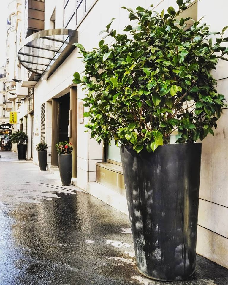 Paysagiste d'intérieur à Paris: Location de plantes d'intérieur