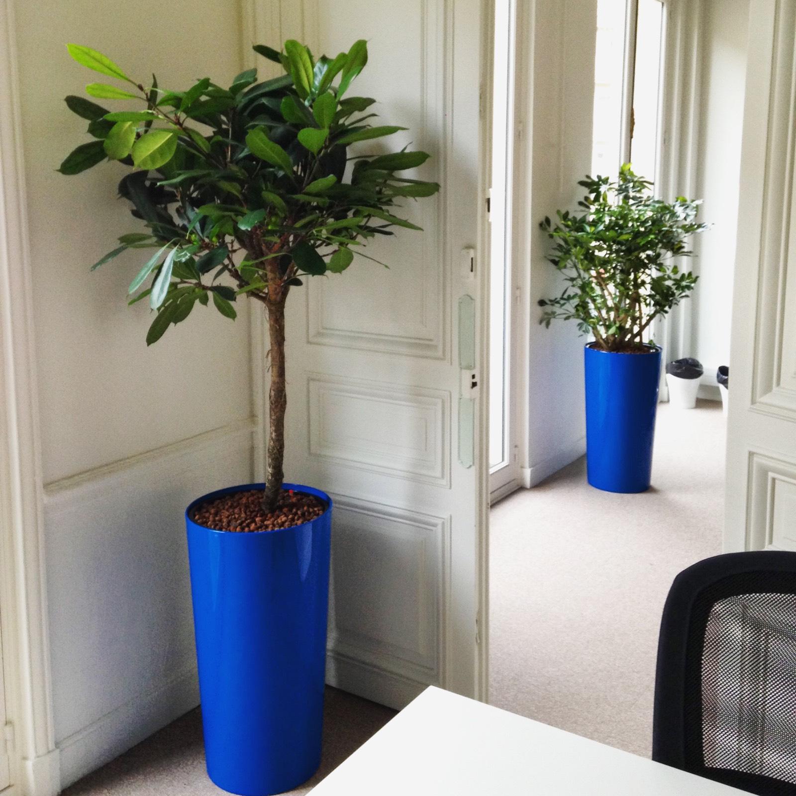 Paysagiste d'intérieur: location de plantes pour ces bureaux près des Champs Elysées à Paris
