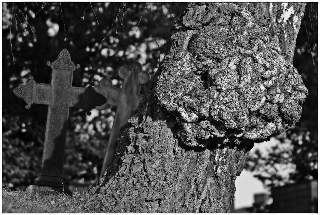 Friedhof Berkenthin