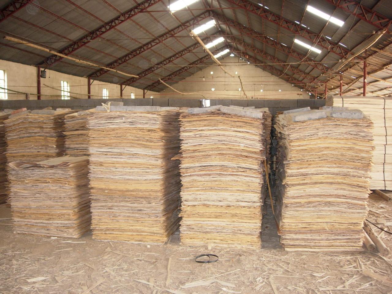 自然乾燥が終了し工場へ集荷された単板