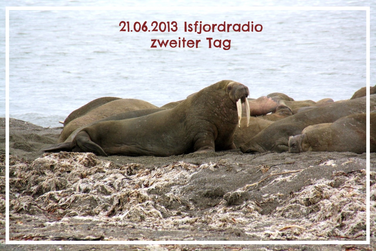 Isfjordradio zweiter Tag