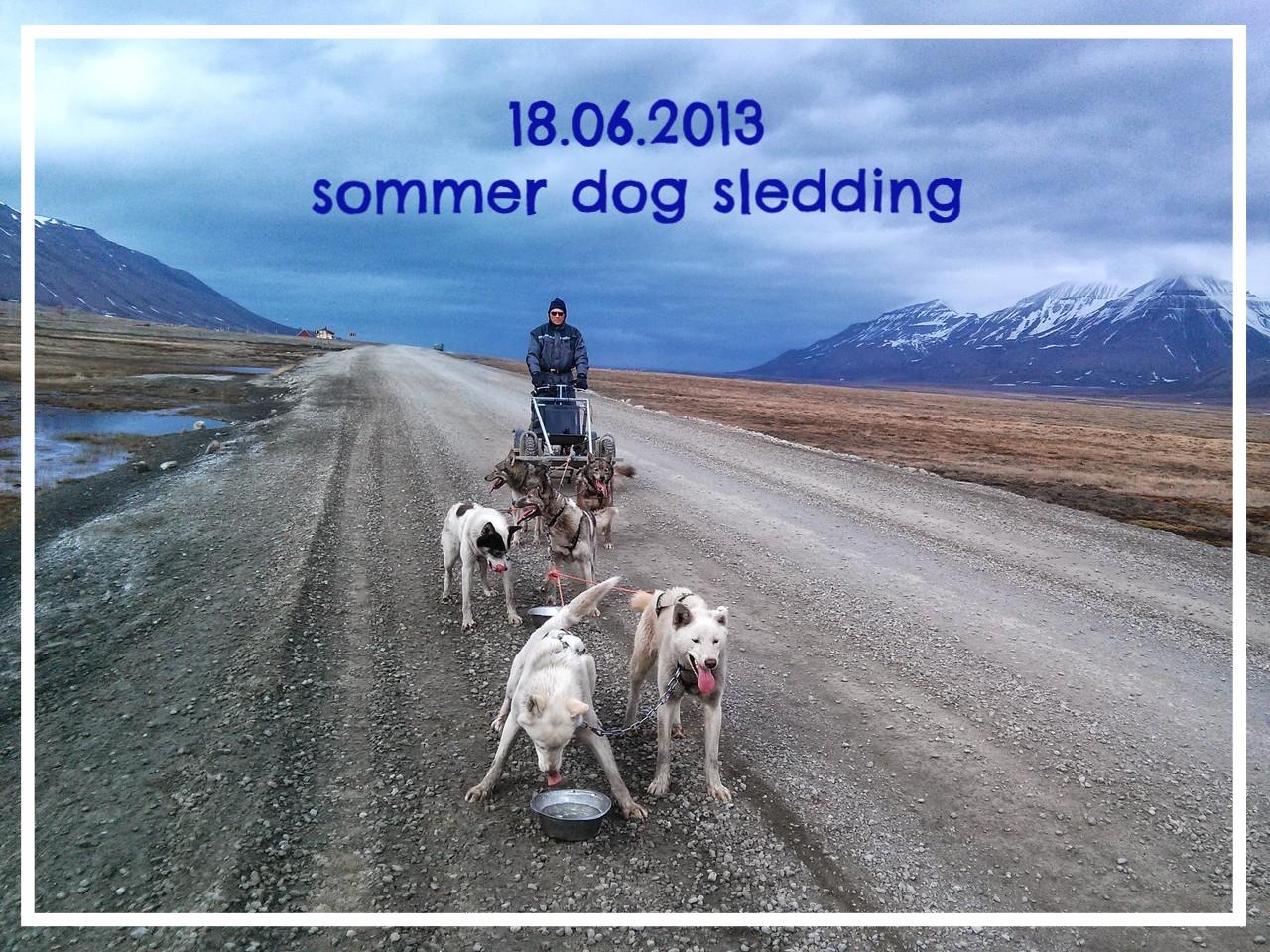 Sommer Dog Sledding