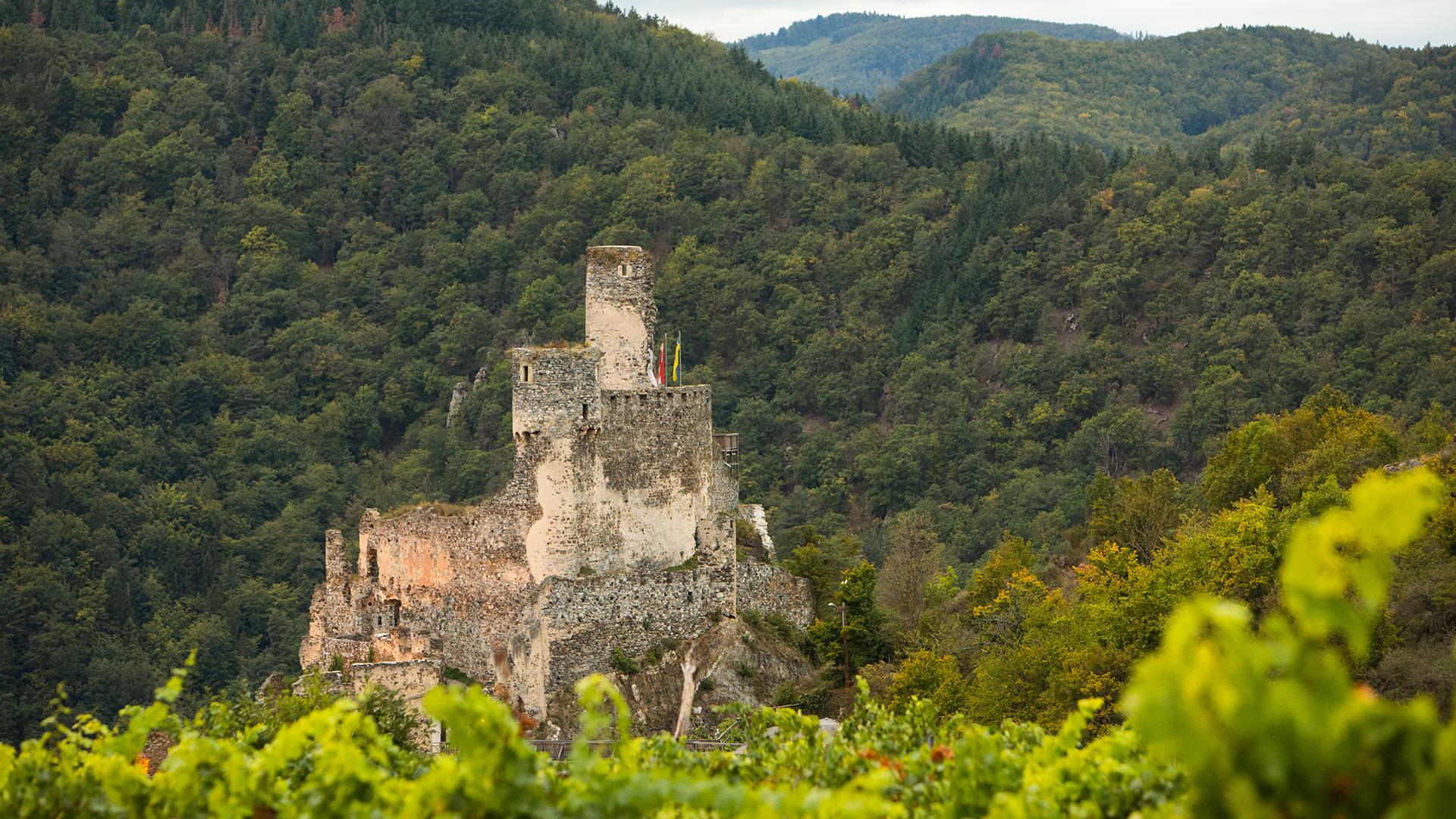 Foto: Verein zur Erhaltung der Burgruine Senftberg