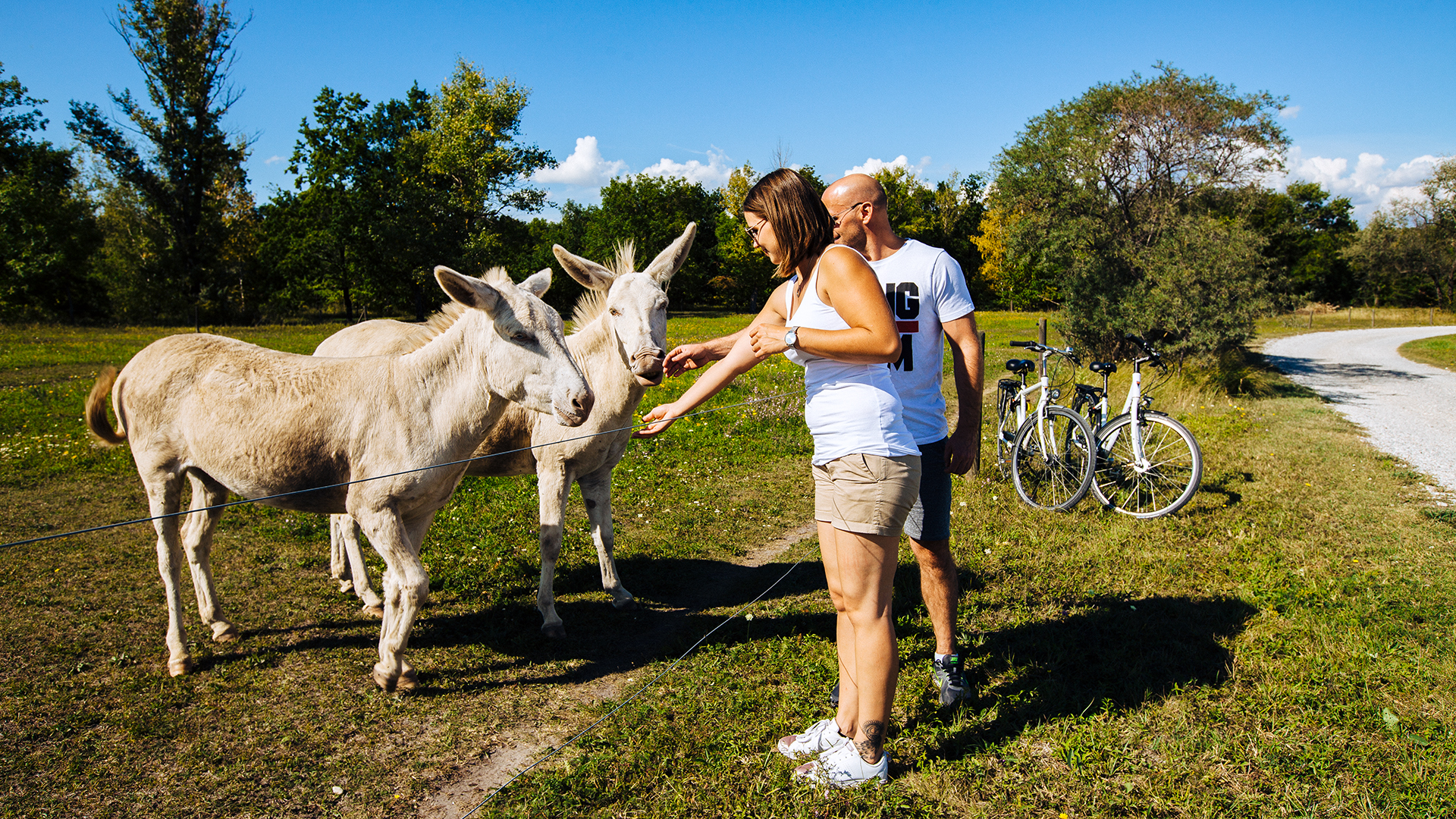 Tierparadies mit Eseln, Pferden und Gänsen