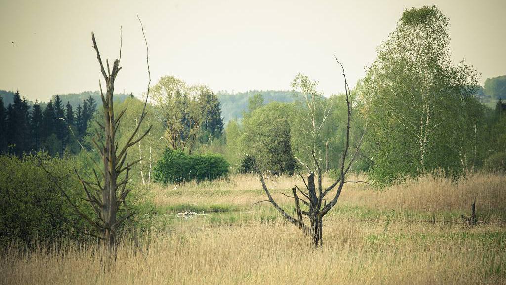 Das Ibmer Moor...