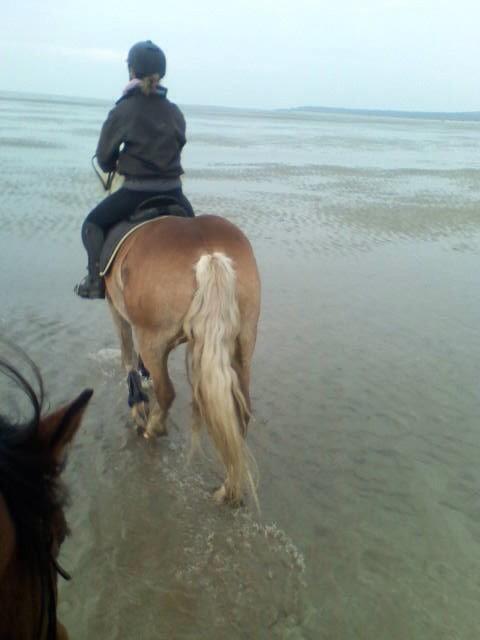 accueil chevaux camping en baie de somme avec pature cheval location mobil home