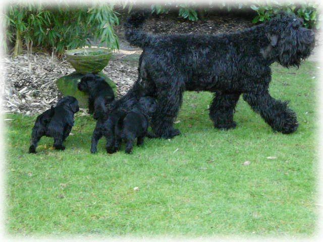 Familienausflug in den Garten