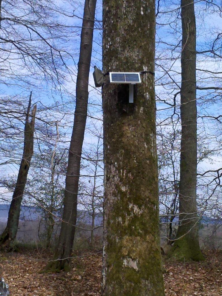 Dauerhorchkiste am Baum