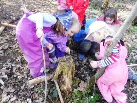 Ein morscher Baumstumpf wird erforscht.