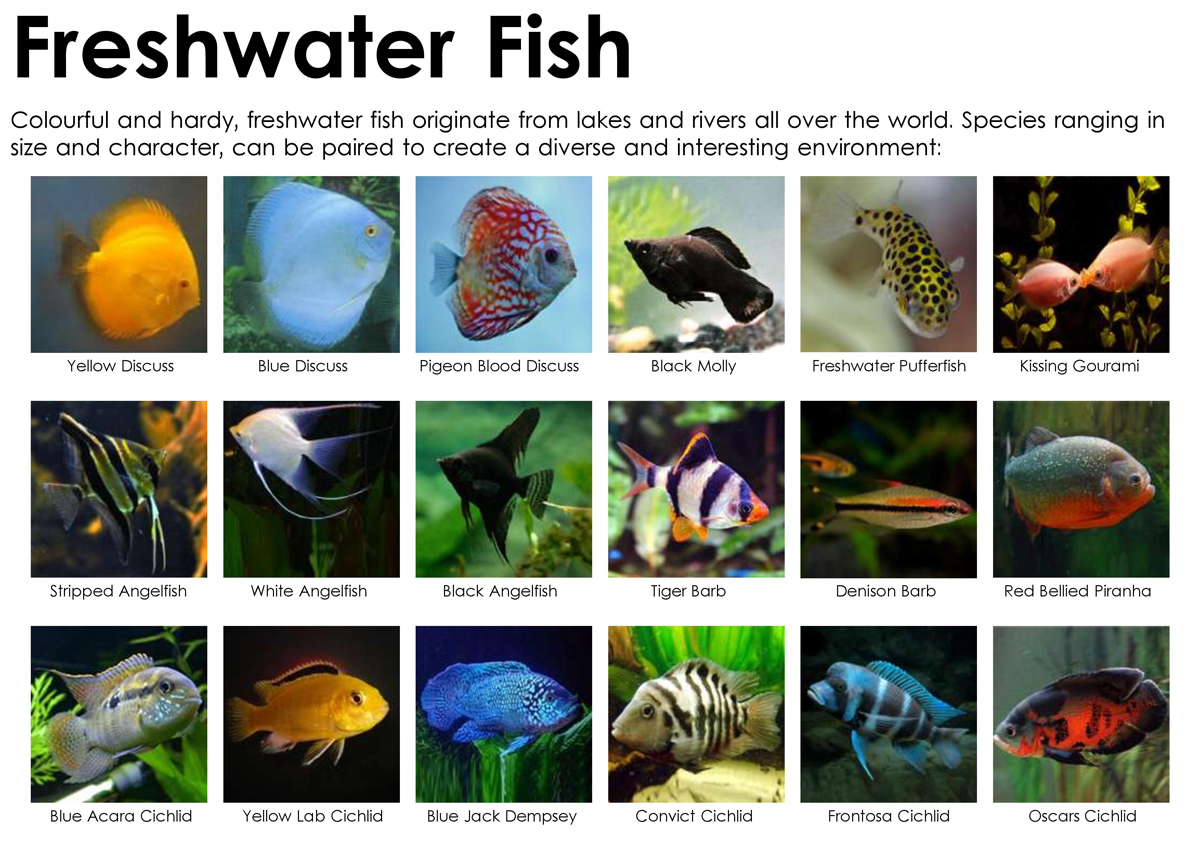 Let S Build Your Own Fish Tank Or Aquarium Ceip Punta