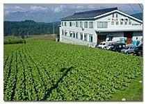 工場に隣接する野沢菜畑