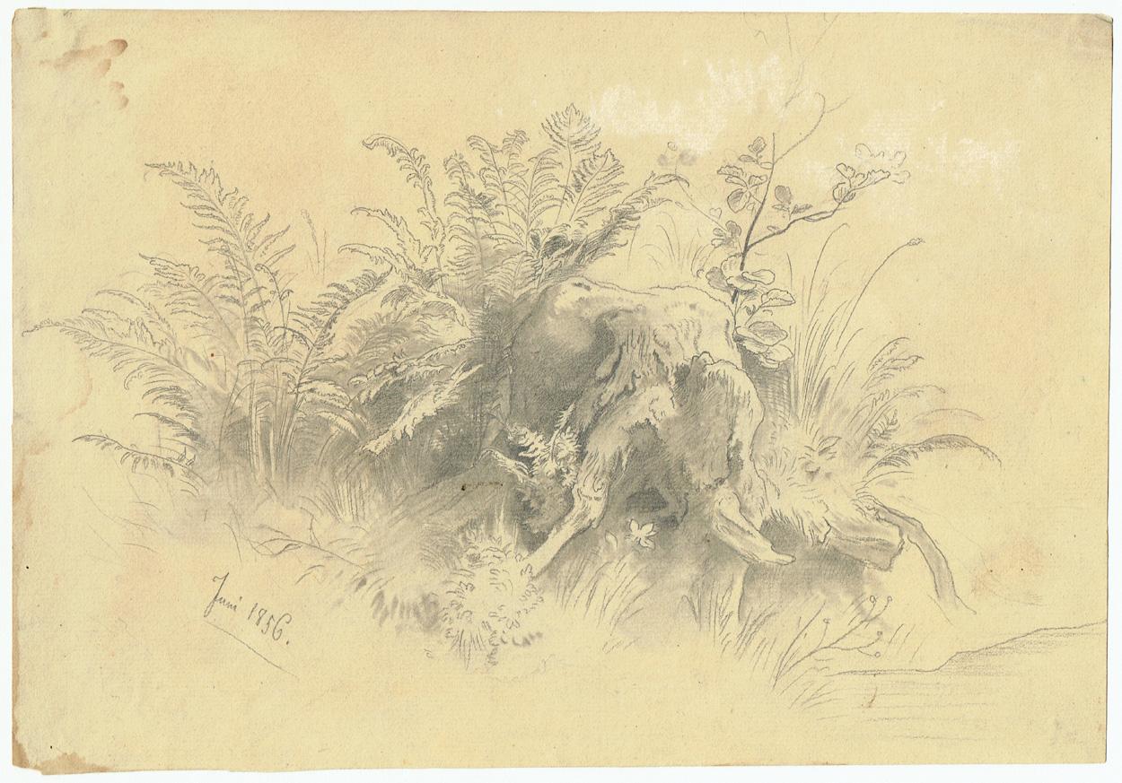 Woldemar Rau, Baumstumpf von Moos und Farn überwachsen