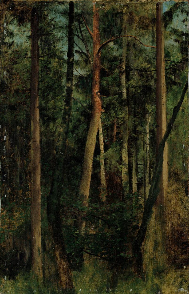Waldstück bei Weimar