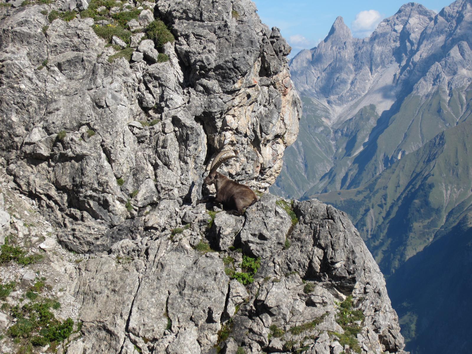 Wir sind nicht allein unterwegs....ein Prachtkerl schaut uns aus sicherer Entfernung beim Klettern zu