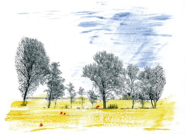Maifelder