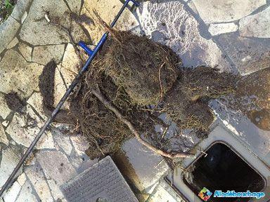 racines dans canalisation WC bouché