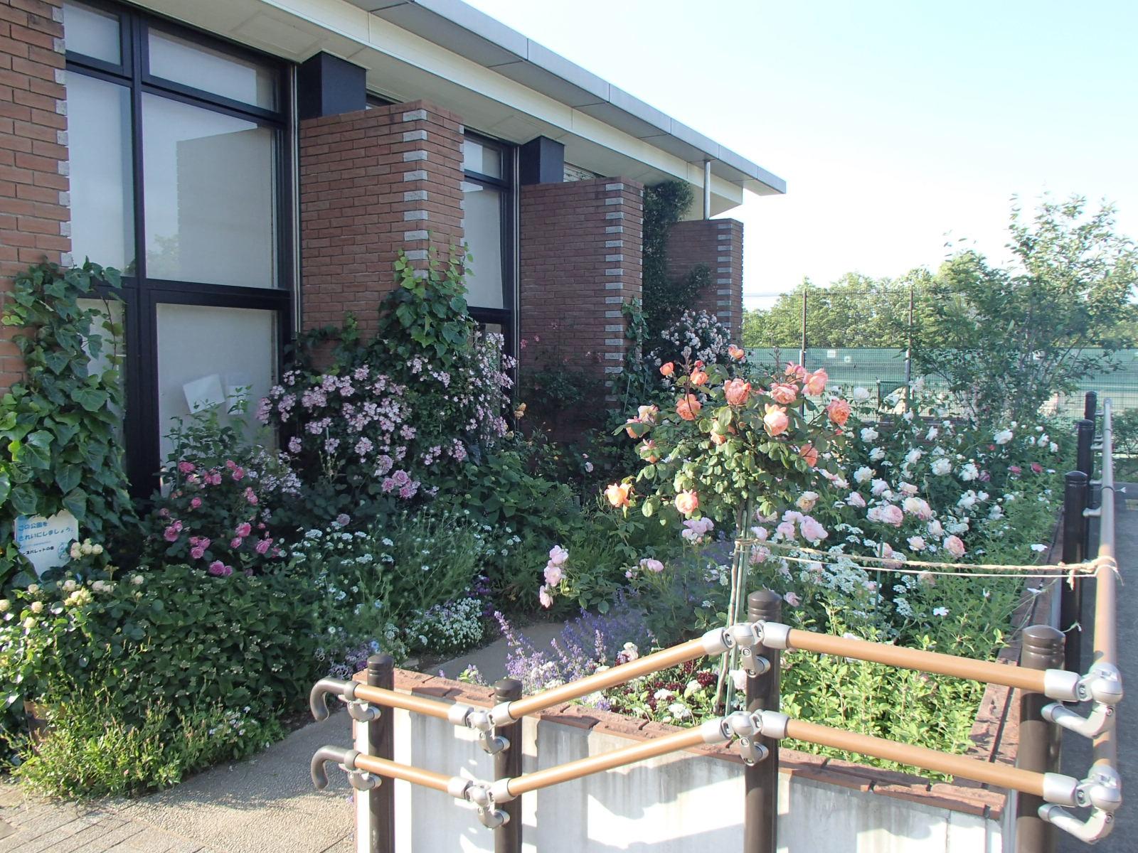 事務所横の花壇 ☆ バラのご紹介♪