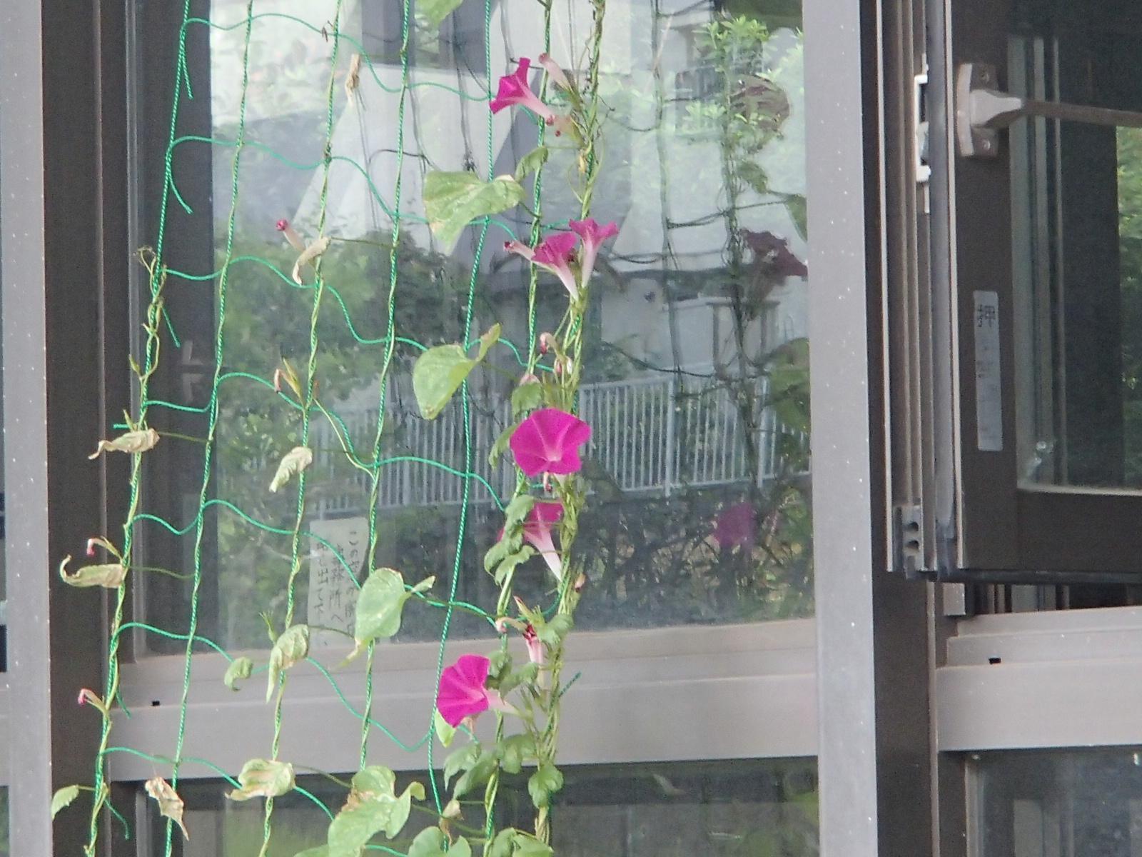 9月☆お花も咲きました♪