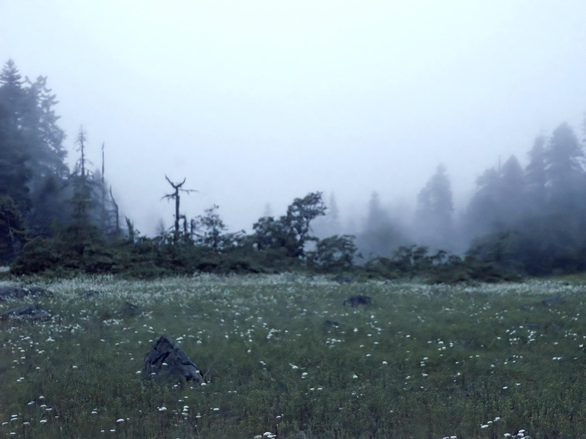 "Dense Fog, Cascade-Siskiyou National Monument, Jackson County, Oregon, 2019. Inkjet print, 34x44"", edition of 11"
