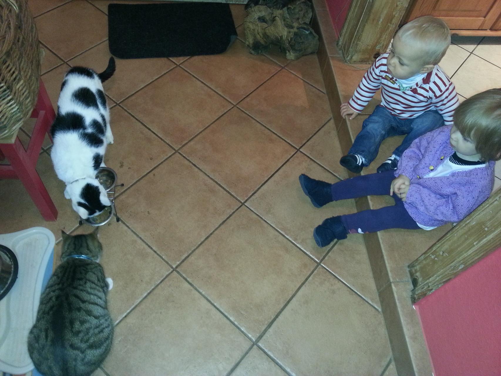 das aufwachsen mit Tieren fördert Sozialkompentenz und Rücksichtsnahme