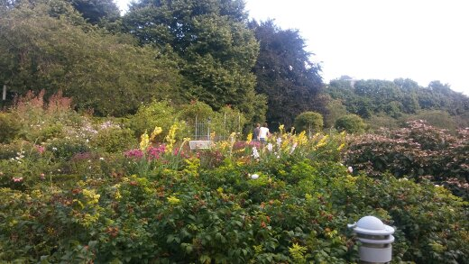 planten un blomen, wallanlagen, hamburg, natur, park, stadtnatur,  führung