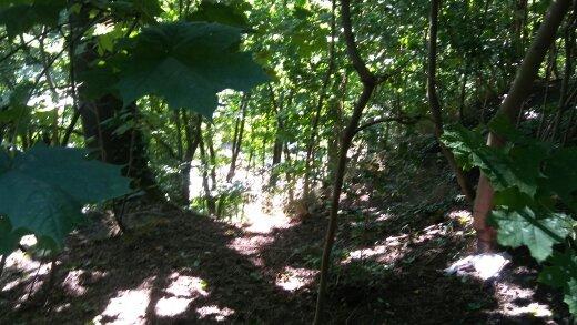 geesthang, heinepark, donnerspark, elbpark zu altona