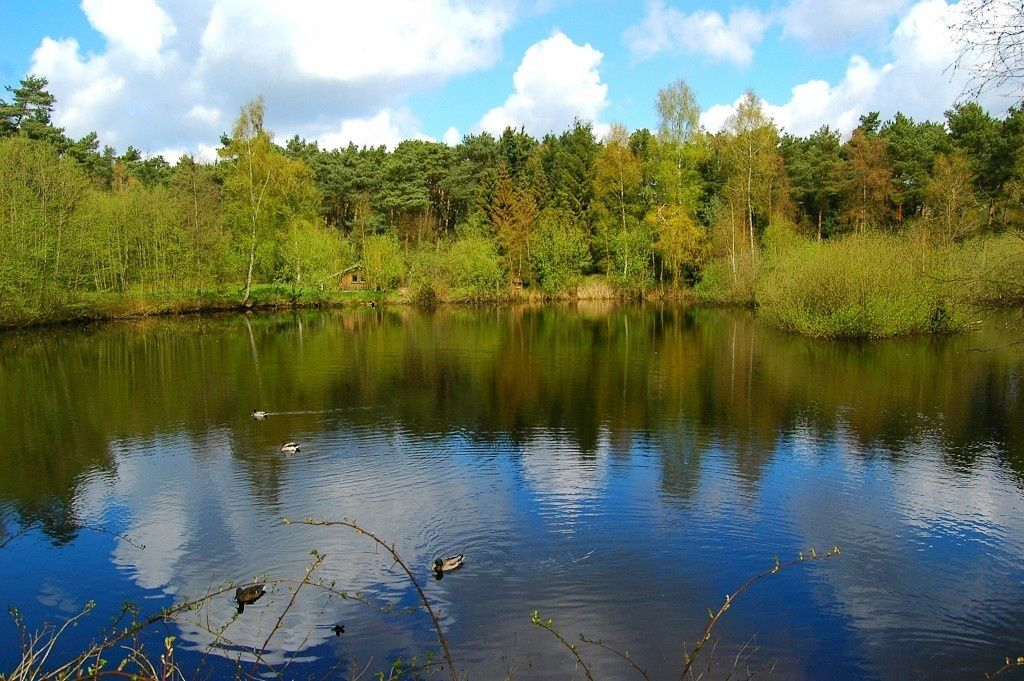 Teich im Wildgehege Forst Klövensteen