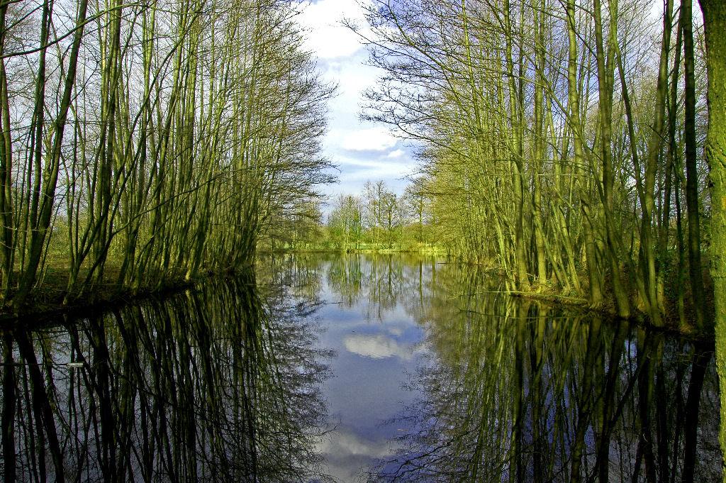 Biotob aufgenommen Uetersen Heidgraben
