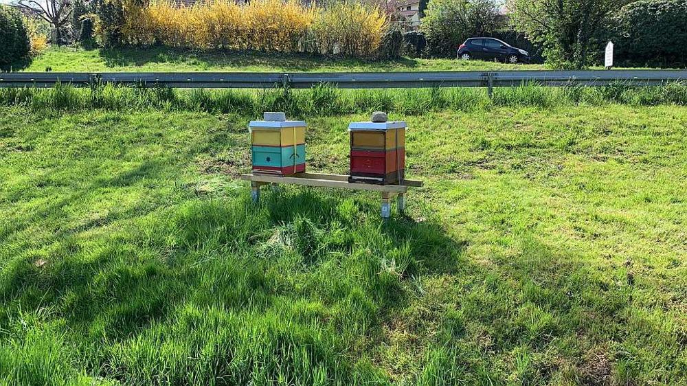 Bienengarten der HonischBienen in Gattnau