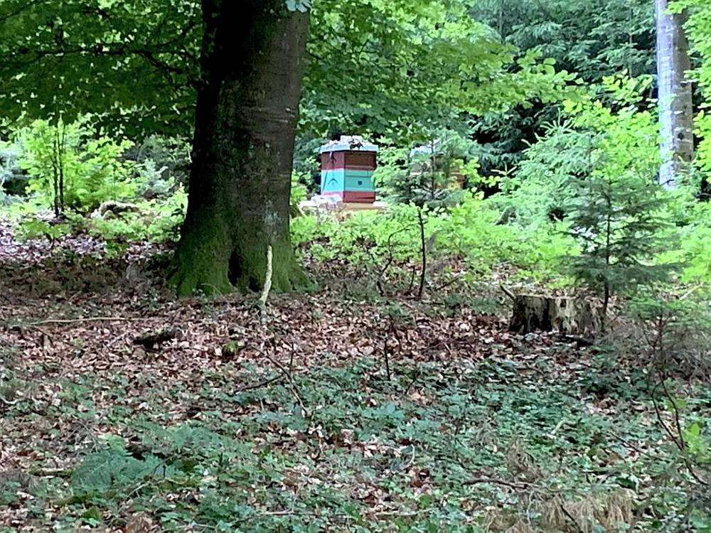 Bienengarten im Wald am Nonnenbach, bei Kressbronn