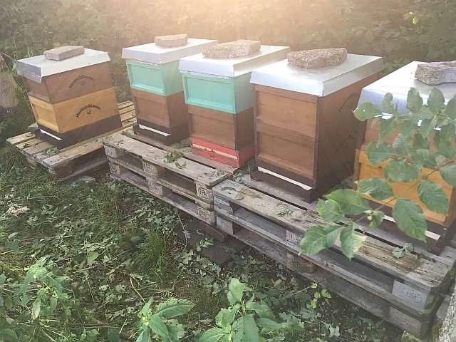 Bienenstand der HonischBienen in Heurenbach bei Bad Waldsee