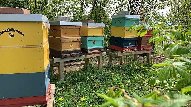 Bienengarten der HonischBienen in Kressbronn am Bodensee