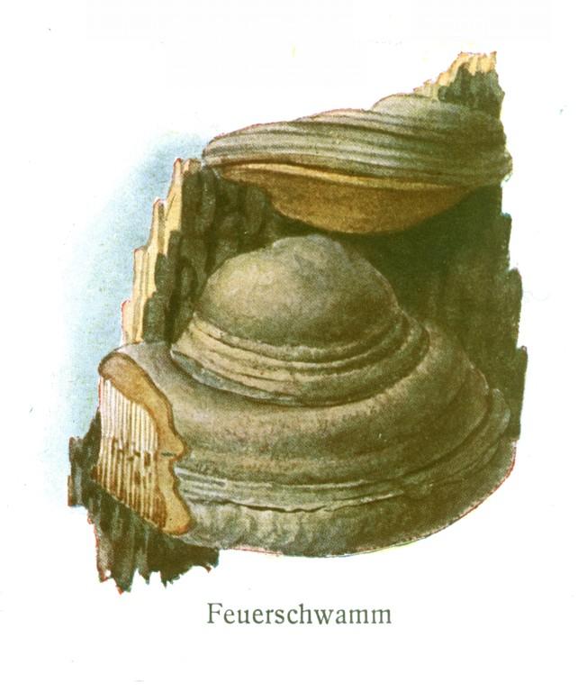 Grauer Feuerschwamm (Phellinus igniarius).