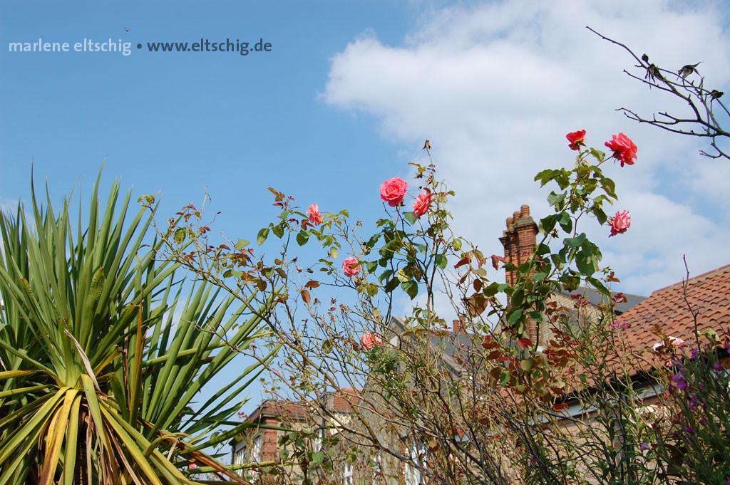 Palme und Rosen auf einem englischen Bahnsteig | Palm tree and roses on an english platform. UK