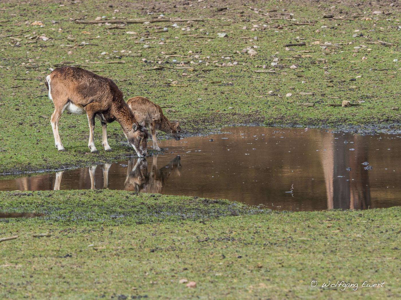 Fast wie in der Savanne  -- Foto: W. Ewert