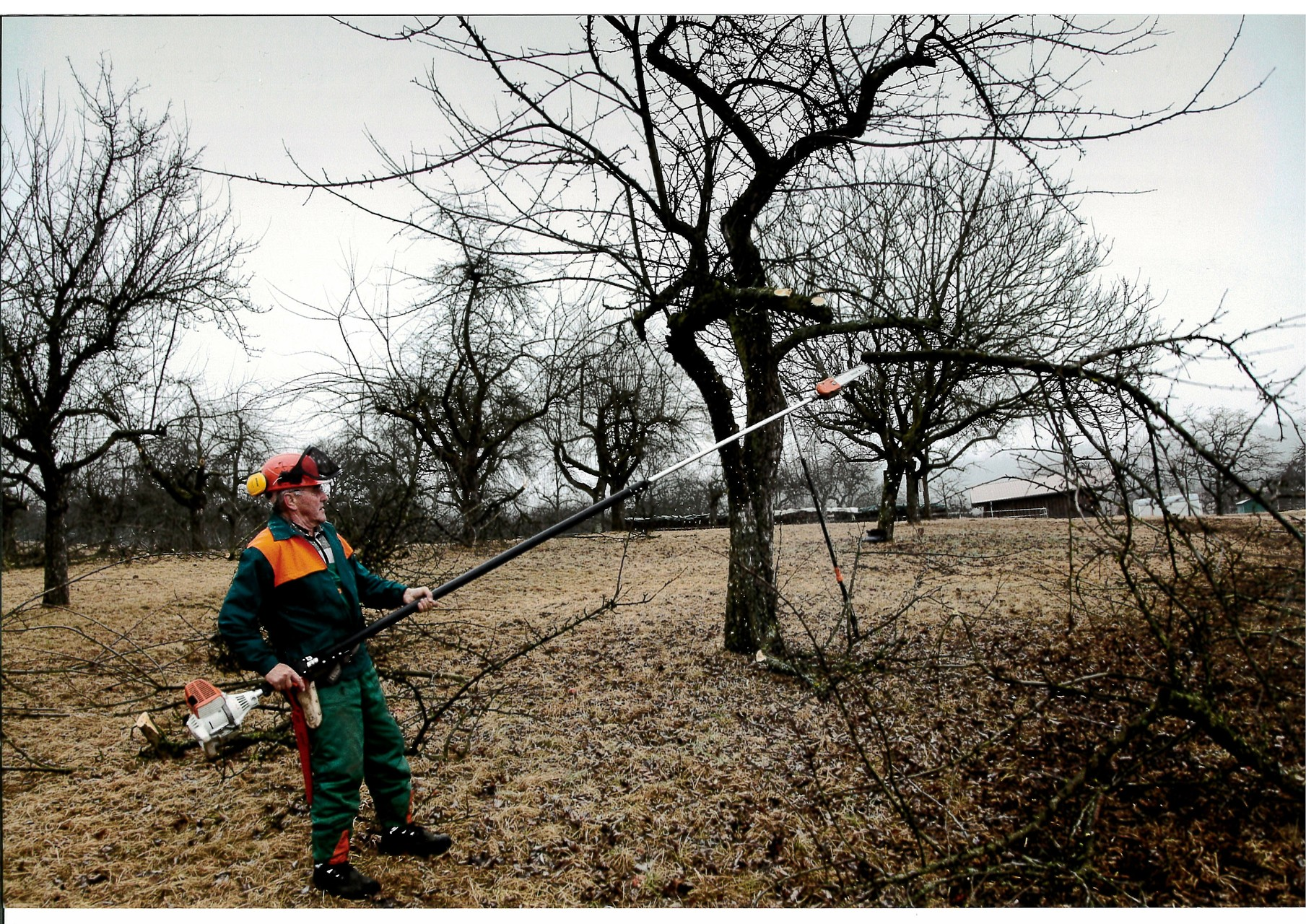 Sanierung alter Bäume