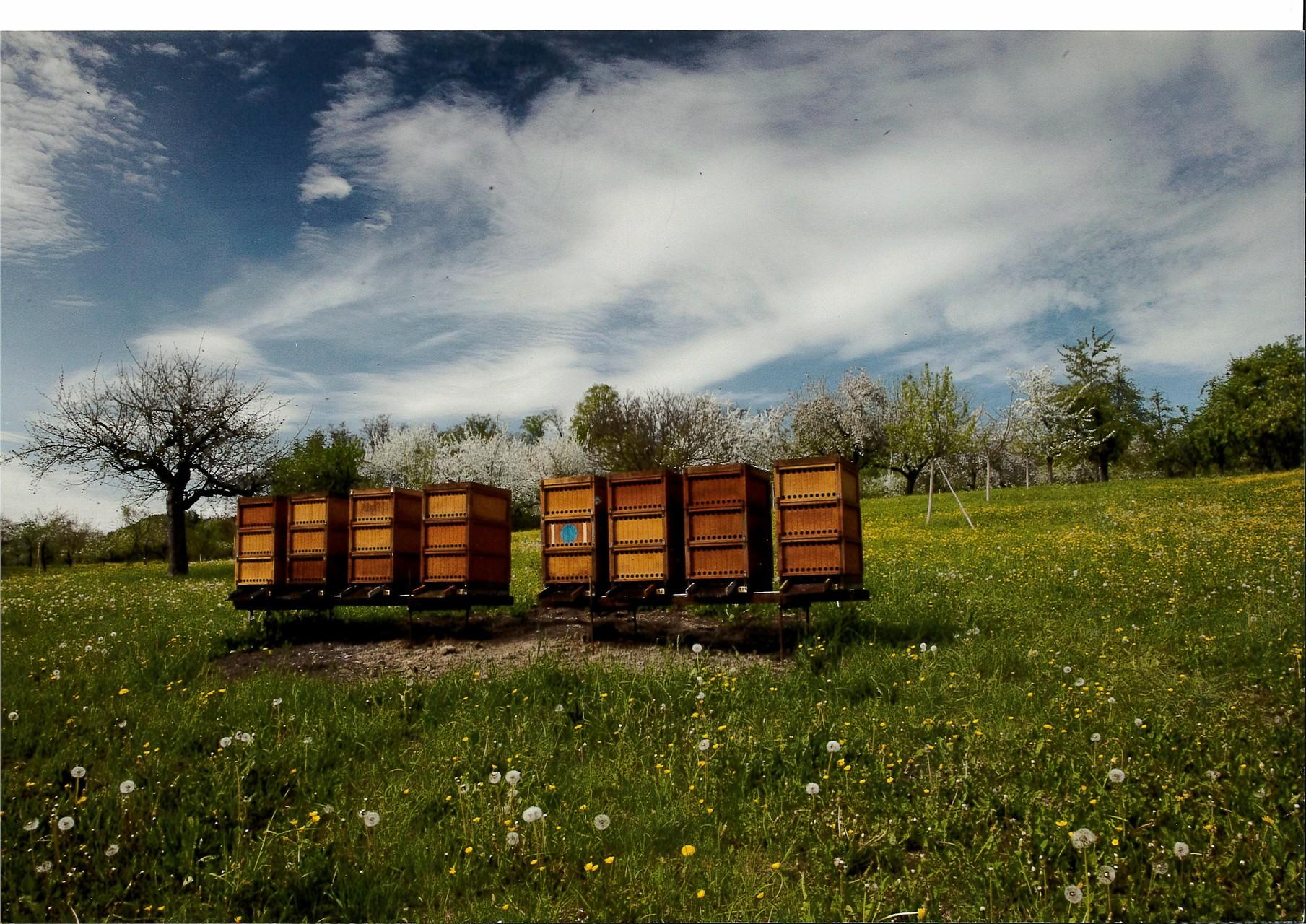 Bienenstände auf dem Pfarrgütle (Imkerei Riedel, Rietenau)