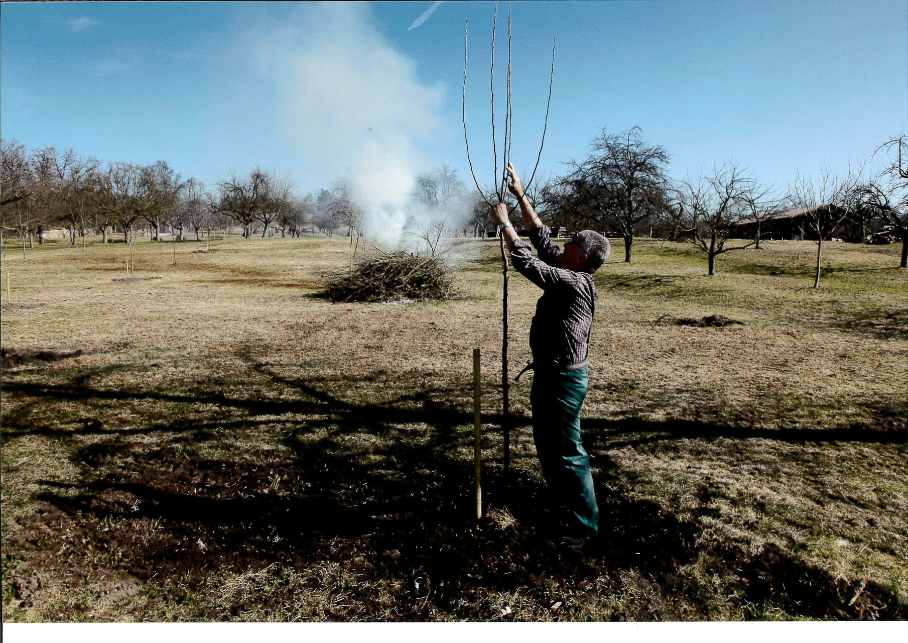 Während der Baumschnitt verbrennt wird schon der nächste Baum gepflanzt
