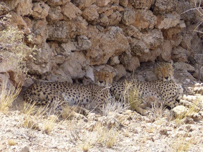 Retour de voyage au KTP, Namibie et Botswana - wookee