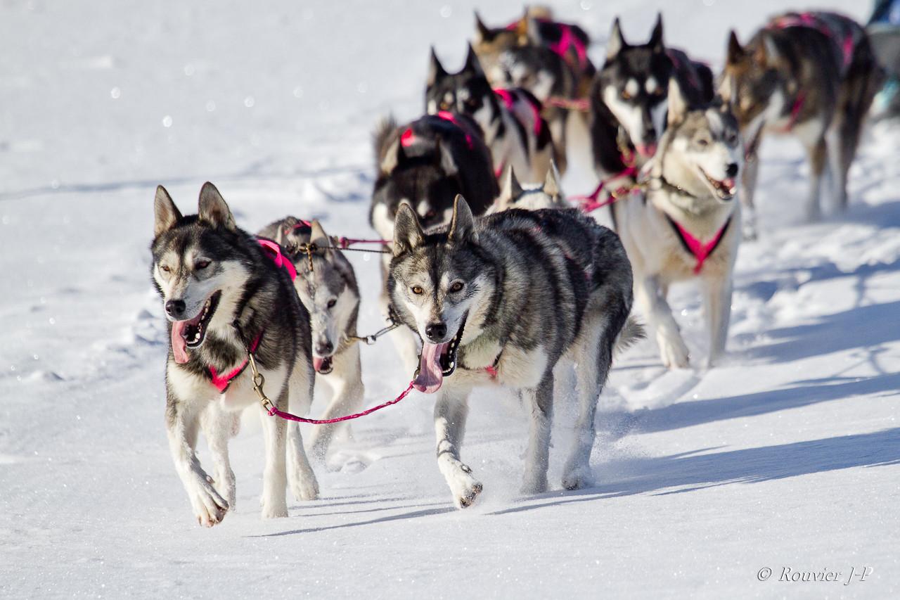 Grizzli & Finnmark, la synchronisation parfaite