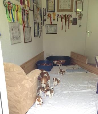 Ihr  Zimmer am Wohnzimmer