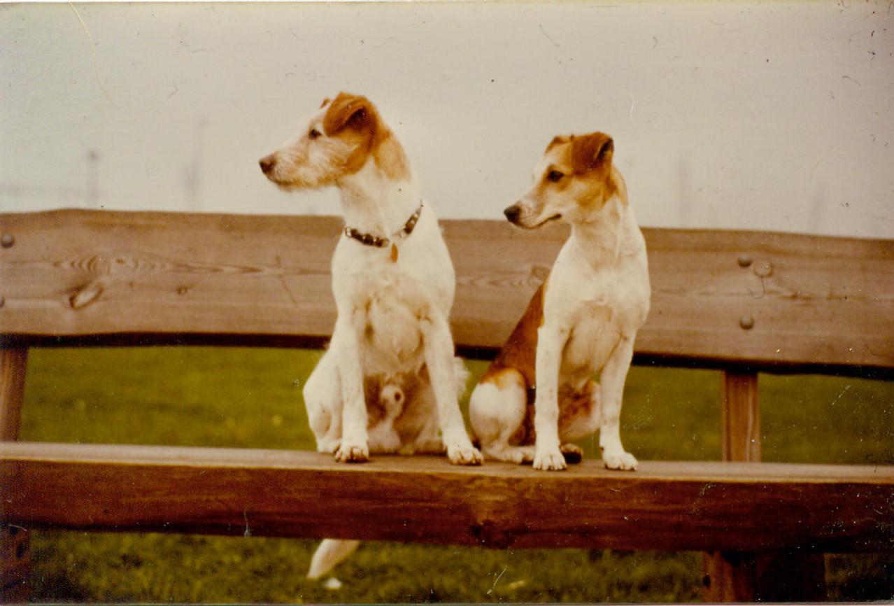 1981 Axel v. d. Poort v. Drenthe und Quimba v. Weddern